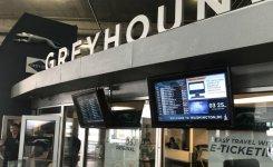MessagePoint.tv Greyhound Network Highlighted